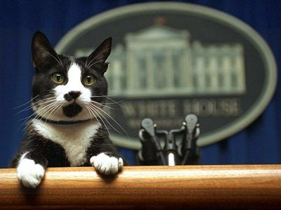 Socks had a lot of responsibility while he was in the White House!