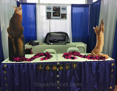 somali cat breed booth for Meet the Breeds, 2018