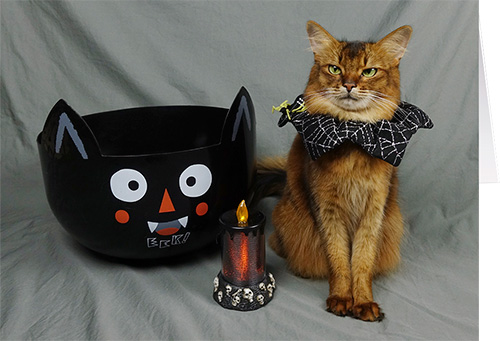 somali cat halloween card