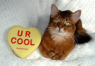 I R cool. My human R not cool
