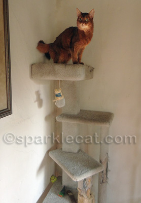 I am wondering where my new and improved cat tree is!
