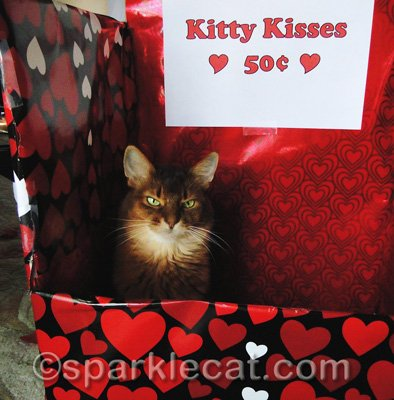 I have made the kissing booth my new napping place!