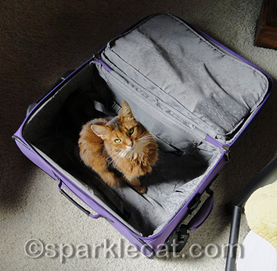 This would make a good cat bed!