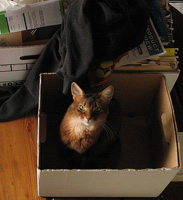 Every cat-owned house need empty boxes