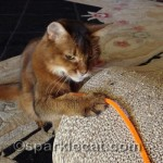 Pipe cleaners and Da Bird are my favorite toys!