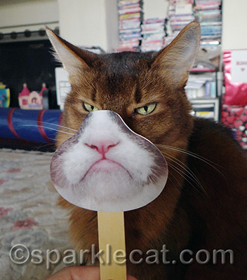 I really didn't need this to look grumpy - can you tell?