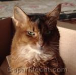 Help Petfinder Promote Us Kitties!
