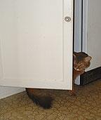 Ignore the cat behind the cabinet door