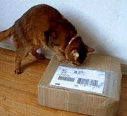 Mmmm - cardboard that smells like the outside