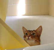 I figured strangers would be too polite to look behind the shower curtain