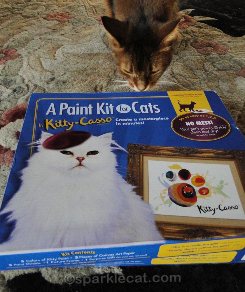 somali cat looking at paint kit for cats