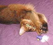 Die, two-dollar toy mouse. Die!
