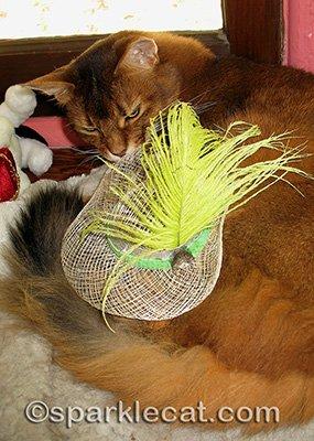 Enter straw hat.