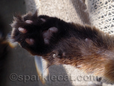 My black paws are one of my coolest features, I think!
