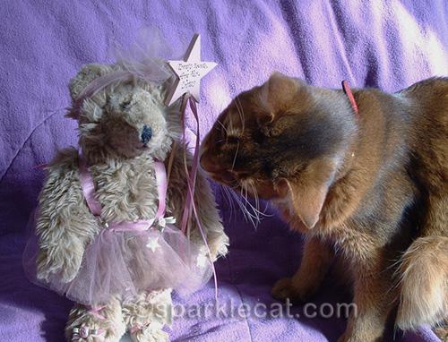 somali cat taste testing a fairy teddy bear