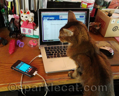Multitasking? No prob for this kitty!