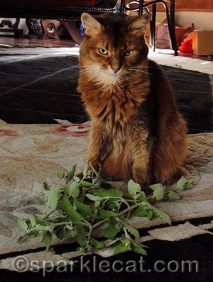 All that work on my catnip plant over the past few months has paid off!