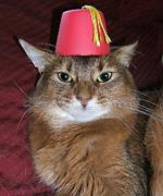 The Feline Secret Society does not require headgear