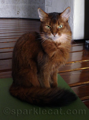 Confession - sometimes I hold meetings on my Cat Yoga Mat