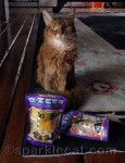 Kitty Bungalow Donation and G-Zees Treat Winner!
