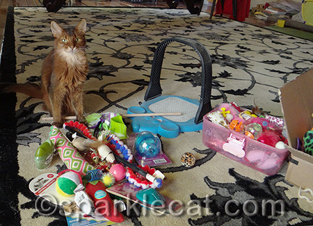 This is just a small amount of the toys we kitties have!