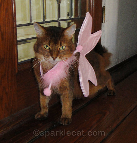 somali cat wearing badly fitting butterfly costume