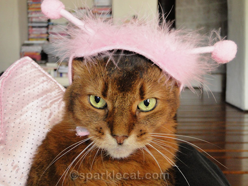 mad somali cat in butterfly costume