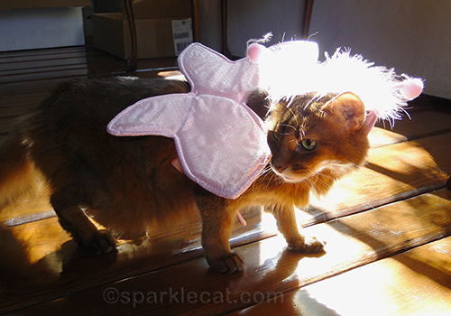 somali cat wearing a butterfly costume