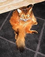 I was attempting Parivrtta Catnasana - Revolved Kitty Pose