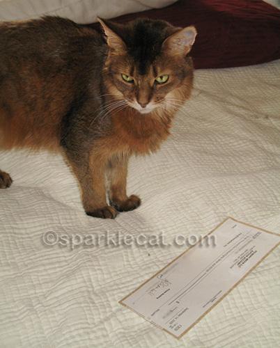 somali cat with book advance check