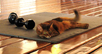 Forget the weights, this pad makes a nice cat bed
