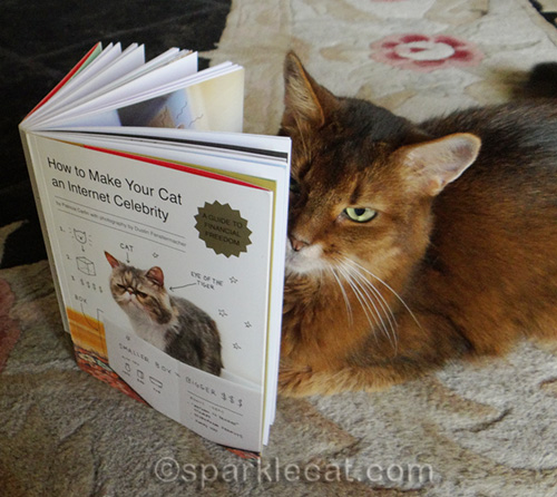 somali cat reads How to Make Your Cat an Internet Celebrity