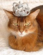 A REAL princess needs no fancy headgear
