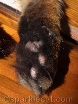 Yes, I have hairy paws. What of it?