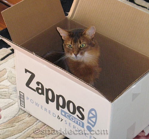 sparkle the designer cat in a box in March 2009