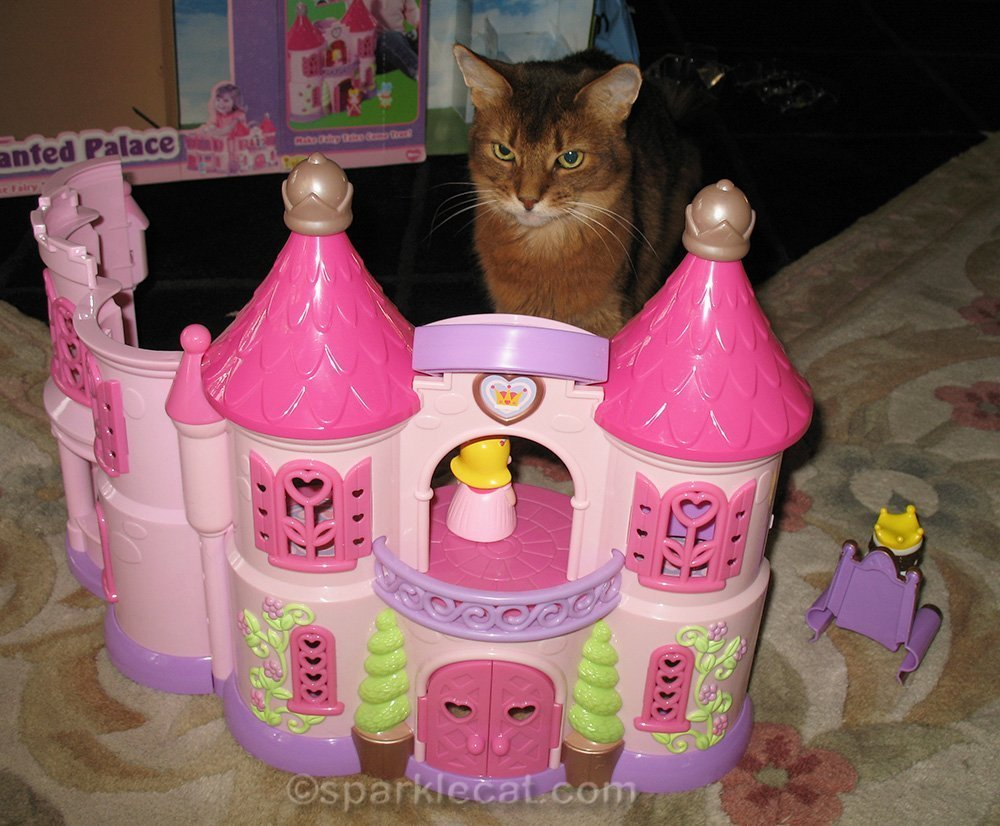 somali cat with enchanted palace