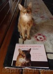 Designer Cat 2014 Calendar Giveaway!