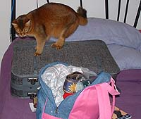 When it comes to things cats dislike, a closed suitcase is second only to a closed door