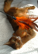 I love killing that feather duster