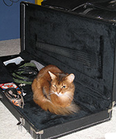 Can I help it if the guitar case is fuzzy just like me?
