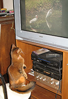 Cat TV rules