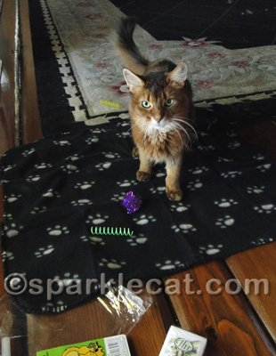 Incidentally, that purple sparkly ball? My human already found it downstairs in the opposite side of the house.