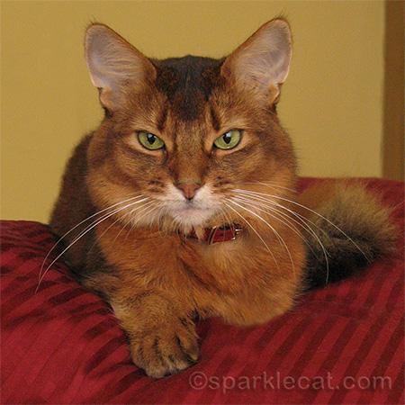 Sparkle the Designer Cat