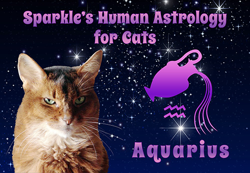 My human is having too much fun with her new Graphicstock account