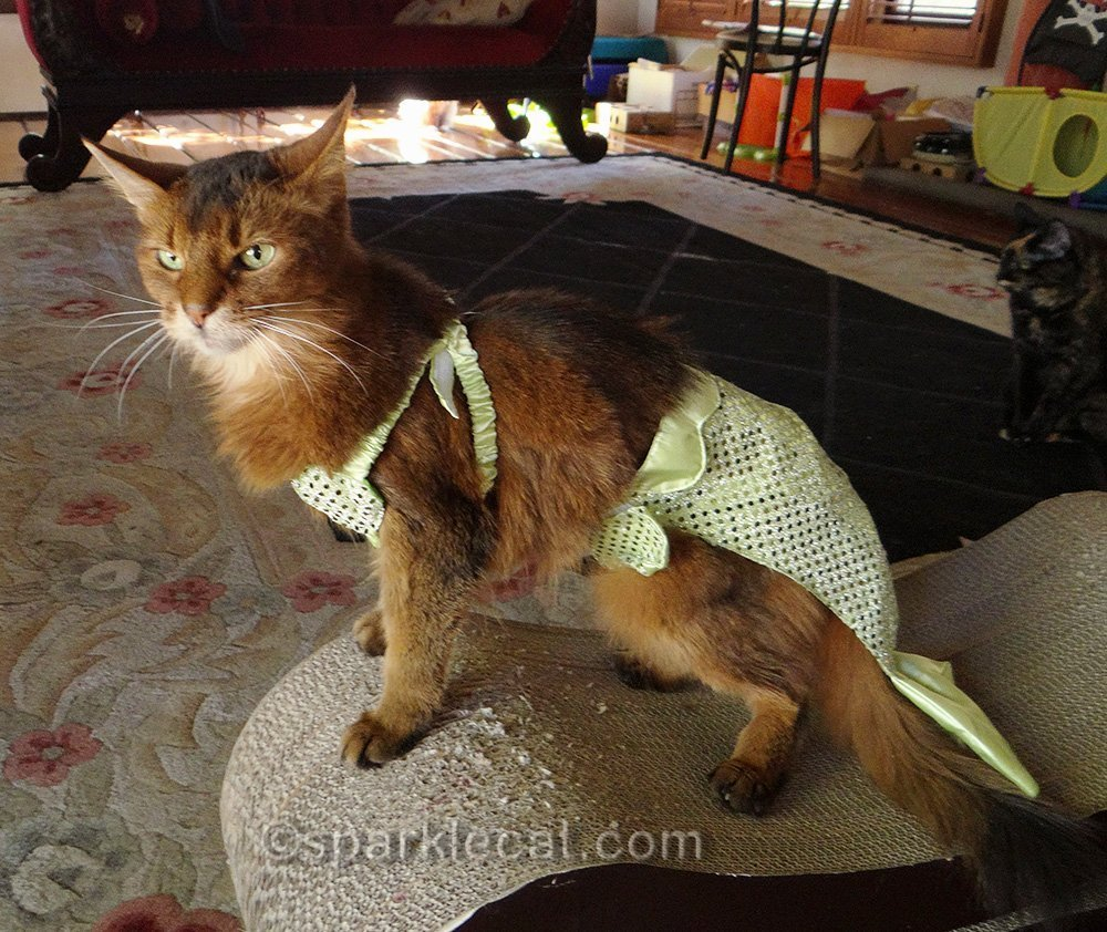 sparkle the designer cat wearing mer-kitty costume