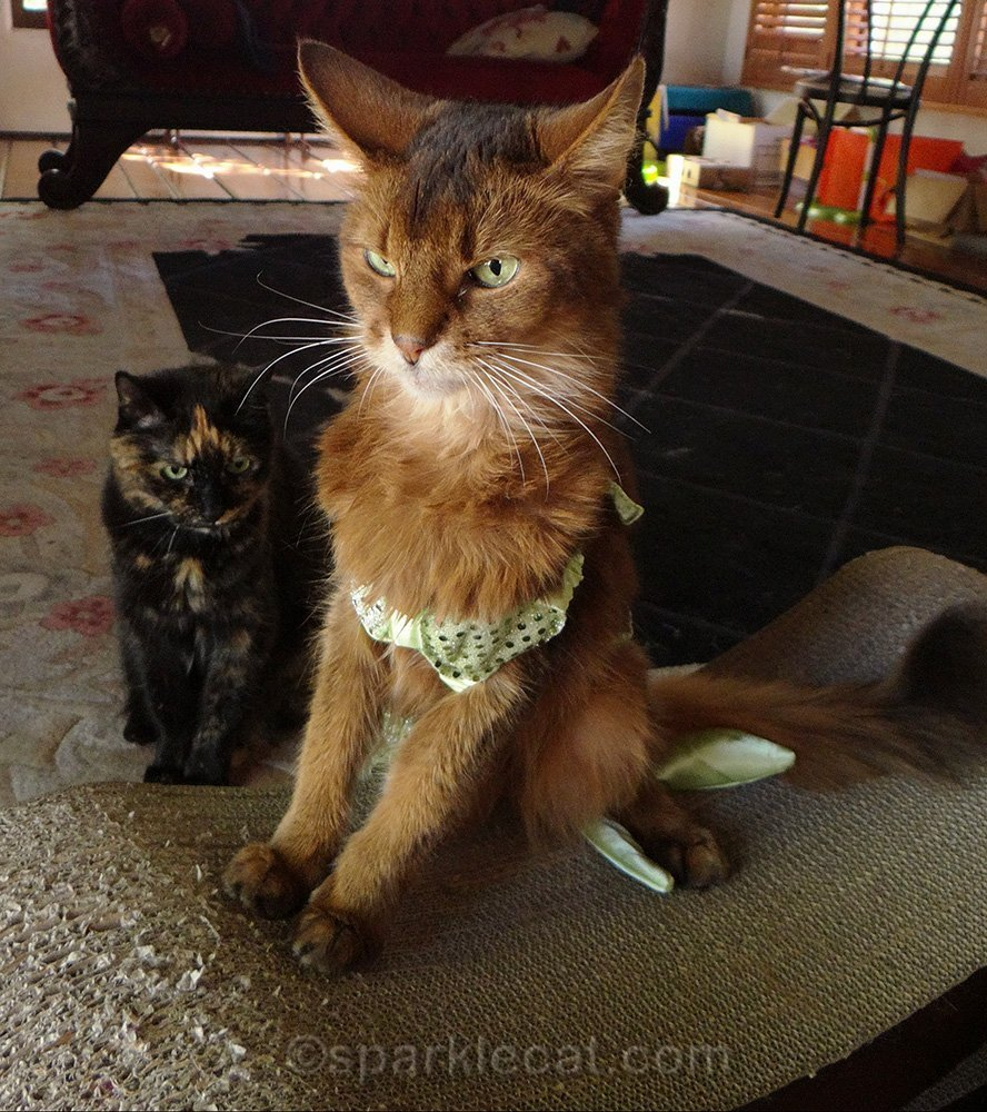 sparkle in mer-kitty costume with tortoiseshell cat silently judging