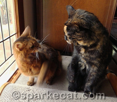 Wordless Wednesday Pissy Cats Sparklecat