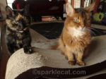 Caturday Flashback With Sparkle… and Binga