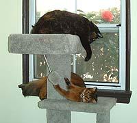 Playing Cat Tree Wars