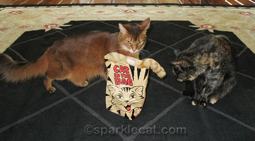 somali cat shows disapproval over cat toy